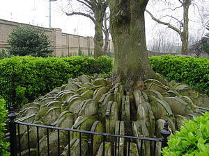 the Hardy Tree, st Pancras old church