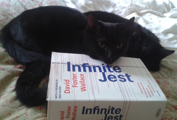 infinite jest and kittens