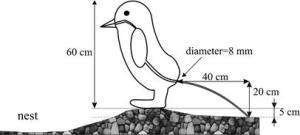 Penguin_pooh