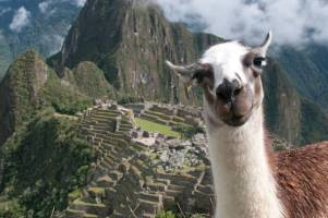 Machu-Picchu-Bossy-the-Llama_art