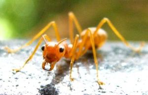 32_ant2